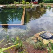 piscine-arborie-entretien-parcs-jardins-2