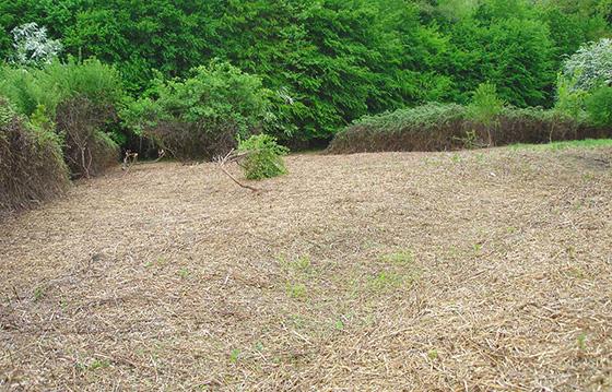 debroussaillage-arborie-entretien-parcs-jardins-32